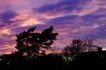 DSC_0233 sunset.jpg