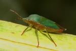 View the album Bugs