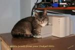 sibby in printer sf.jpg
